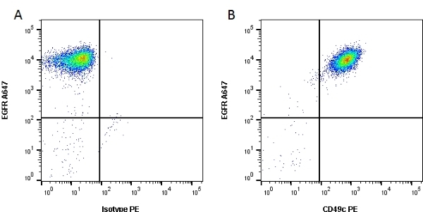 Anti Human CD49c Antibody, clone 17C6 gallery image 1