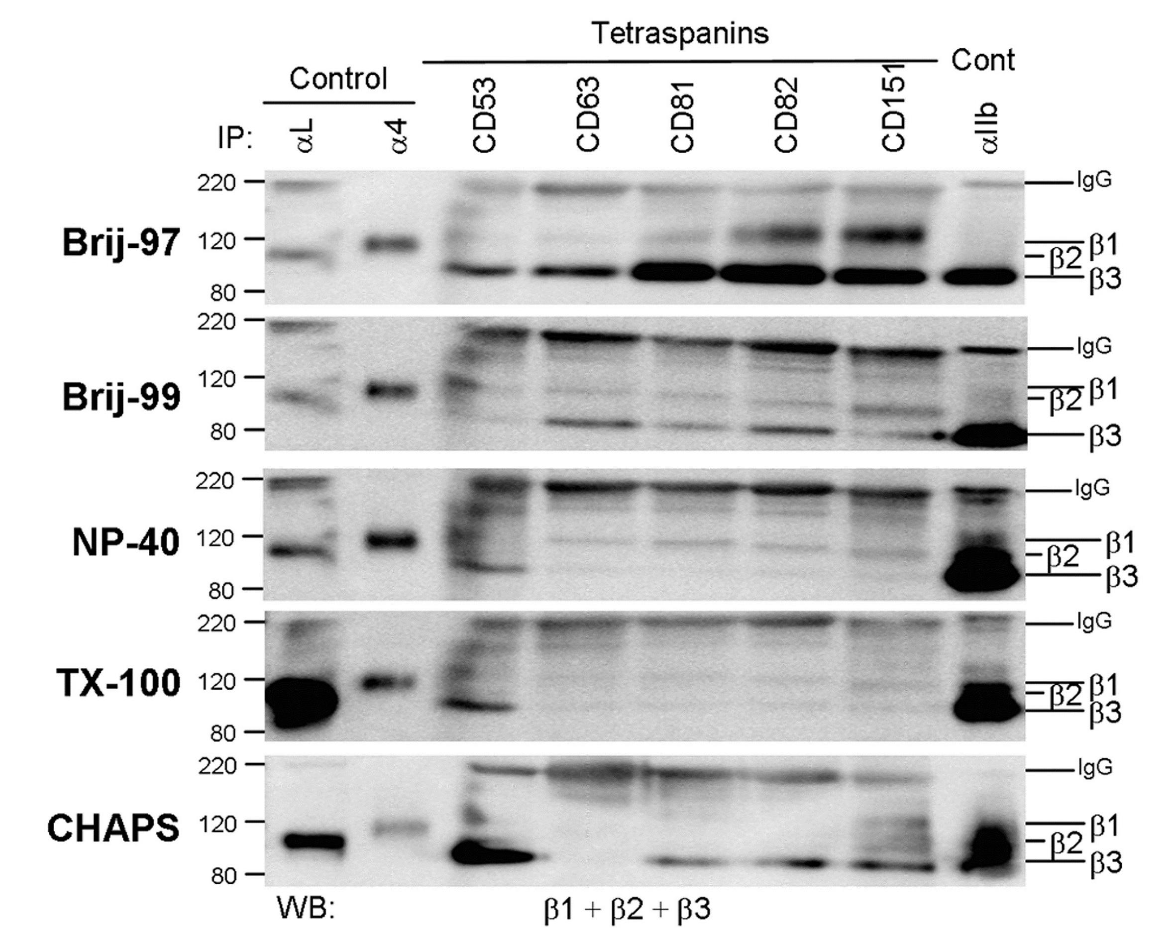 Anti Human CD49d Antibody, clone HP2/1 thumbnail image 3