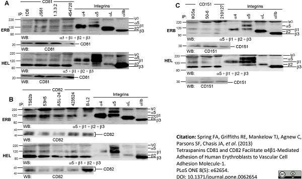 Anti Human CD49d Antibody, clone HP2/1 thumbnail image 4