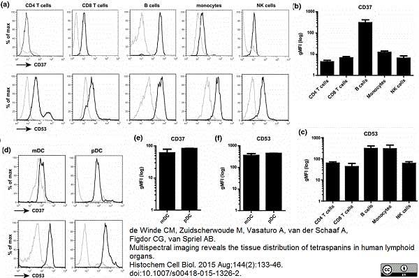 Anti Human CD53 Antibody, clone MEM-53 thumbnail image 2
