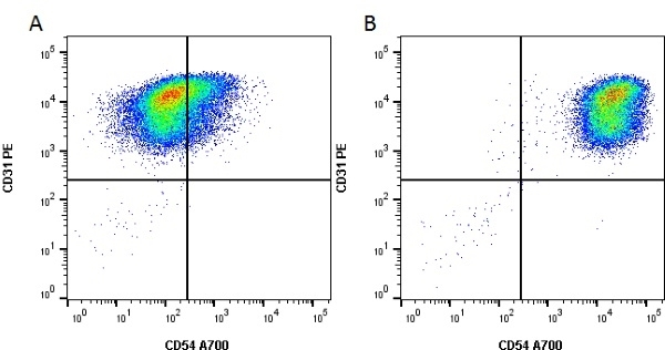 Anti Human CD54 Antibody, clone 15.2 thumbnail image 1