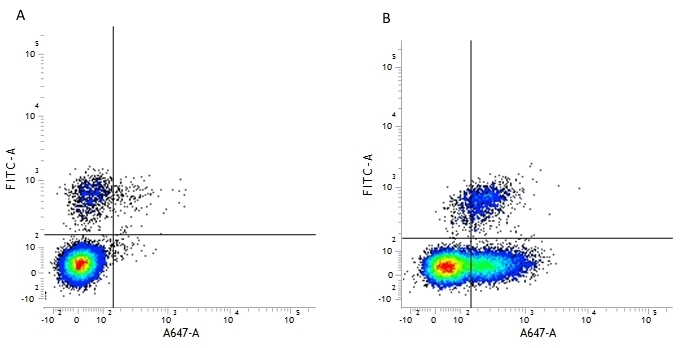 Anti Human CD54 Antibody, clone 15.2 thumbnail image 2