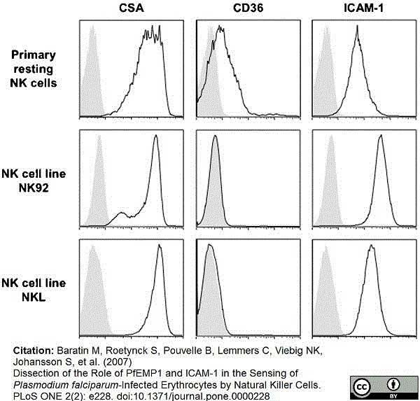 Anti Human CD54 Antibody, clone 15.2 thumbnail image 5
