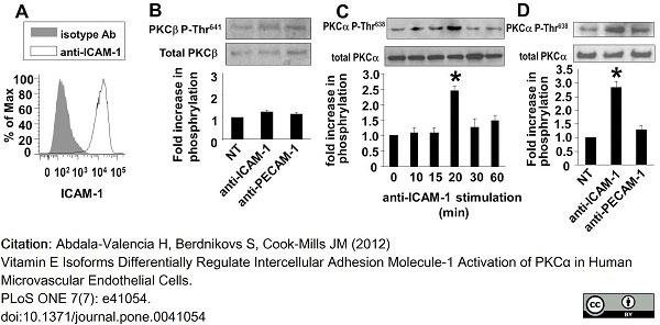 Anti Human CD54 Antibody, clone 84H10 gallery image 1