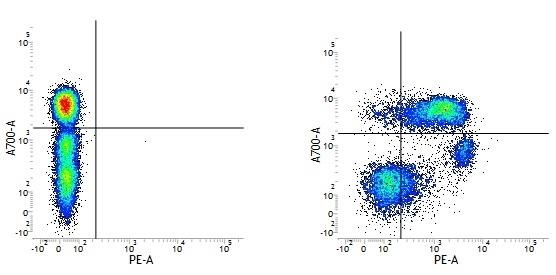 Anti Human CD55 Antibody, clone 67 thumbnail image 1