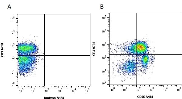 Anti Human CD55 Antibody, clone 67 thumbnail image 4