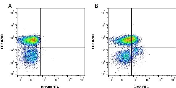Anti Human CD55 Antibody, clone 67 thumbnail image 5