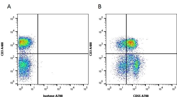 Anti Human CD55 Antibody, clone 67 thumbnail image 6