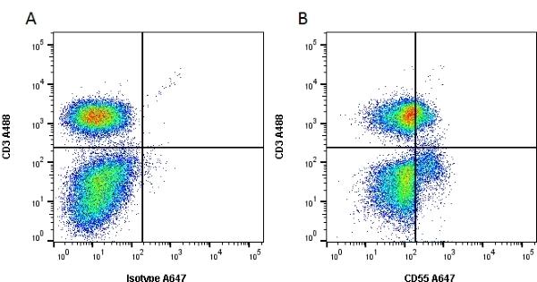 Anti Human CD55 Antibody, clone 67 thumbnail image 7