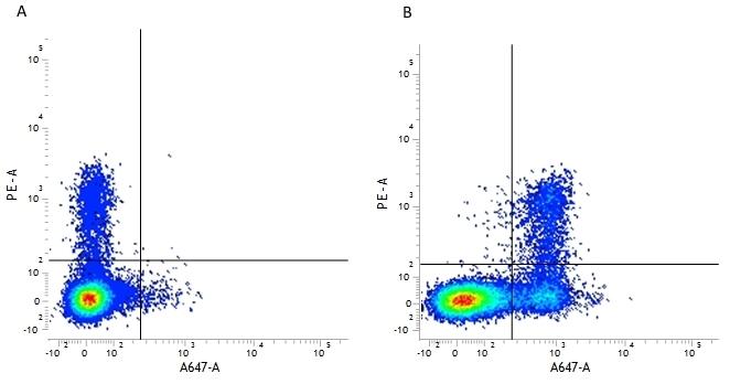 Anti Human CD56 Antibody, clone 123C3 thumbnail image 3