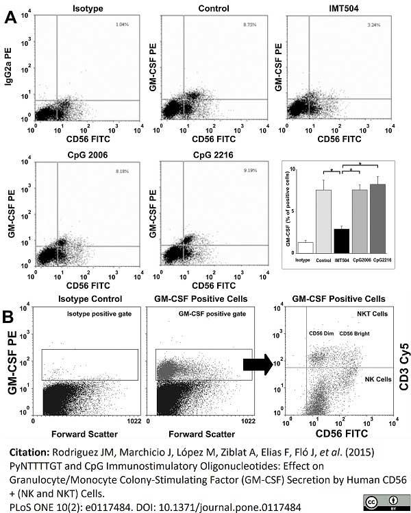 Anti Human CD56 Antibody, clone MEM-188 thumbnail image 4