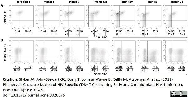 Anti Human CD57 Antibody, clone TB01 thumbnail image 3
