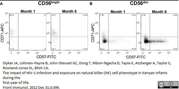 Anti Human CD57 Antibody, clone TB01 thumbnail image 4