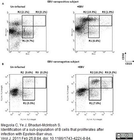Anti Human CD58 Antibody, clone MEM-63 thumbnail image 4