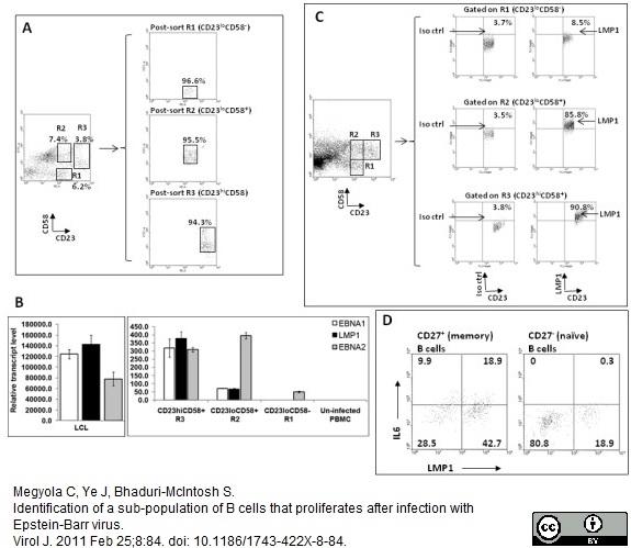 Anti Human CD58 Antibody, clone MEM-63 thumbnail image 6