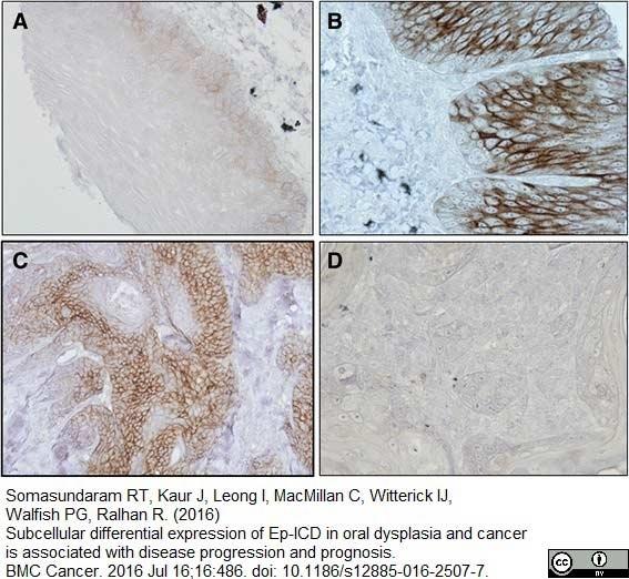 Anti Human CD58 Antibody, clone MEM-63 thumbnail image 7