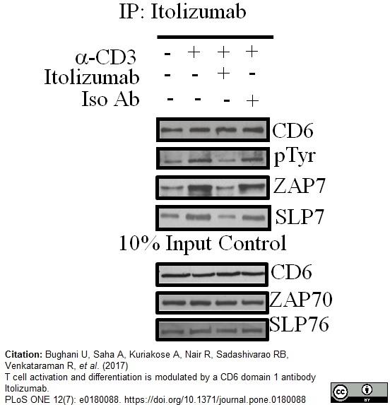 Anti Human CD6 Antibody, clone MEM-98 thumbnail image 5