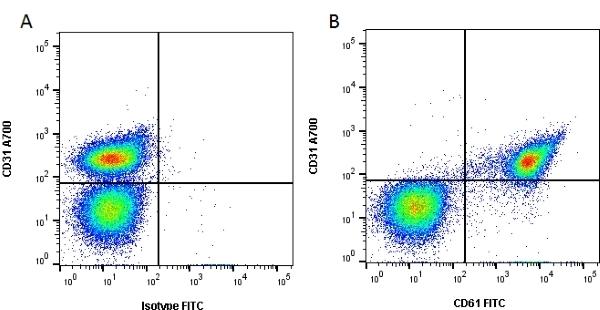 Anti Human CD61 Antibody, clone Y2/51 thumbnail image 1