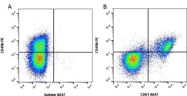 Anti Human CD61 Antibody, clone Y2/51 thumbnail image 2