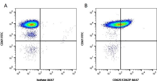 Anti Human CD62E/CD62P Antibody, clone 1.2B6 gallery image 1
