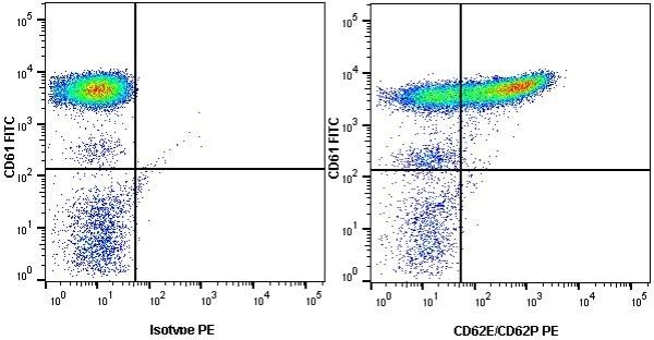 Anti Human CD62E/CD62P Antibody, clone 1.2B6 thumbnail image 2
