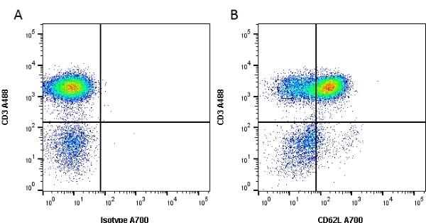 Anti Human CD62L Antibody, clone FMC46 thumbnail image 1