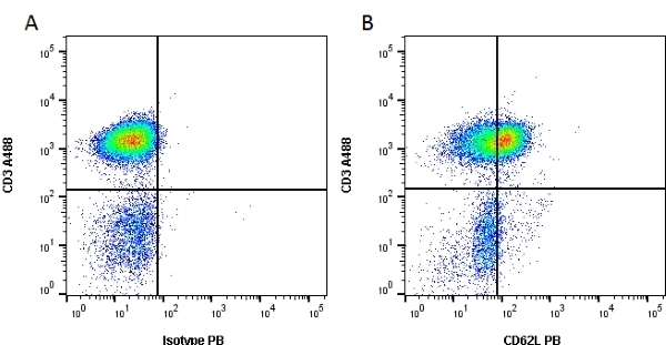 Anti Human CD62L Antibody, clone FMC46 thumbnail image 2