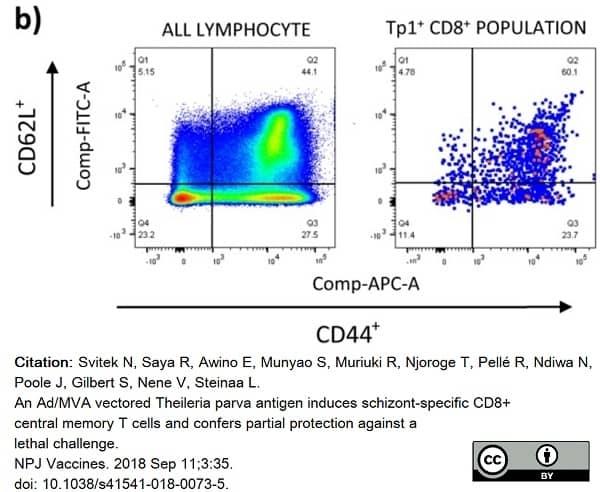 Anti Human CD62L Antibody, clone FMC46 thumbnail image 5