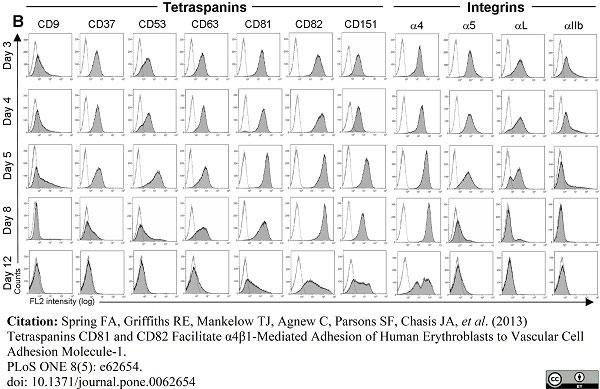 Anti Human CD63 Antibody, clone MEM-259 thumbnail image 2