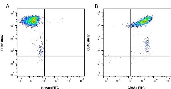 Anti Human CD66b Antibody, clone 80H3 thumbnail image 1