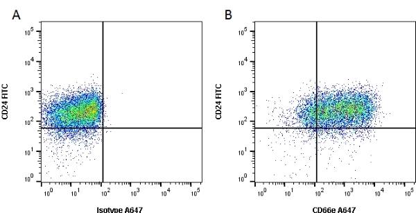 Anti Human CD66e Antibody, clone C365D3(NCRC23) thumbnail image 2