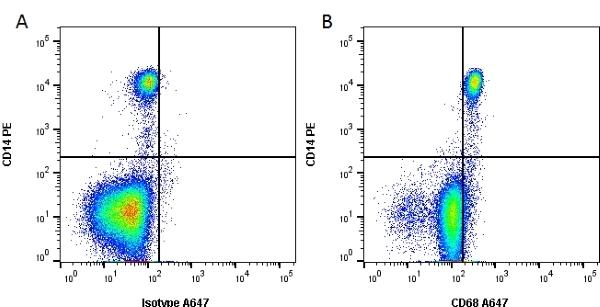 Anti Human CD68 Antibody, clone Y1/82A thumbnail image 1