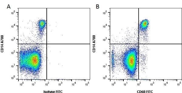 Anti Human CD68 Antibody, clone Y1/82A thumbnail image 2
