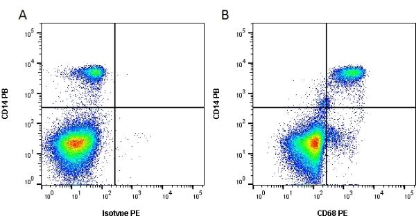 Anti Human CD68 Antibody, clone Y1/82A thumbnail image 3