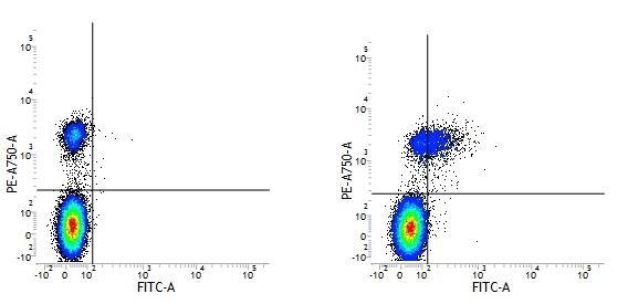 Anti Human CD74 Antibody, clone Bu45 gallery image 1