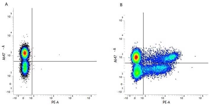 Anti Human CD8 Antibody, clone LT8 thumbnail image 6