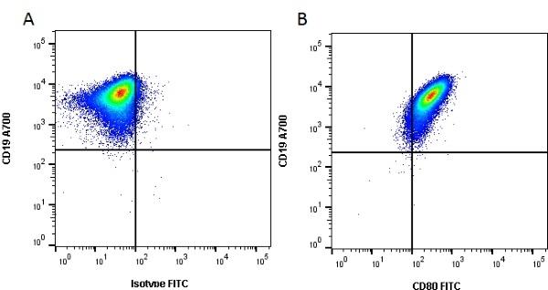 Anti Human CD80 Antibody, clone MEM-233 gallery image 1