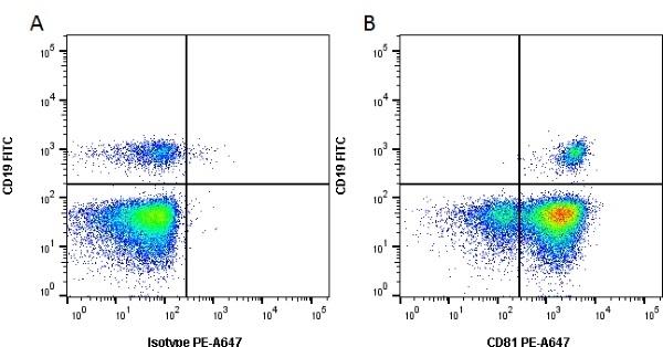 Anti Human CD81 Antibody, clone 1D6 thumbnail image 1