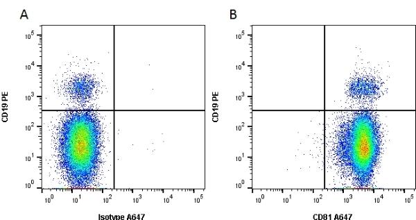 Anti Human CD81 Antibody, clone 1D6 thumbnail image 3