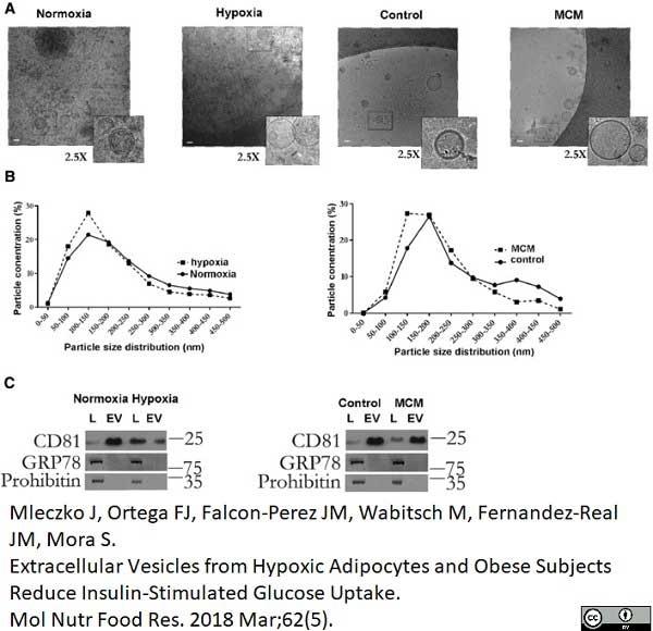 Anti Human CD81 Antibody, clone 1D6 thumbnail image 6