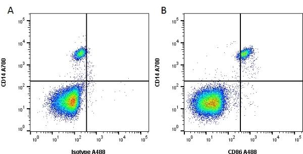 Anti Human CD86 Antibody, clone BU63 thumbnail image 2