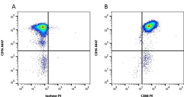 Anti Human CD88 Antibody, clone P12/1 thumbnail image 1