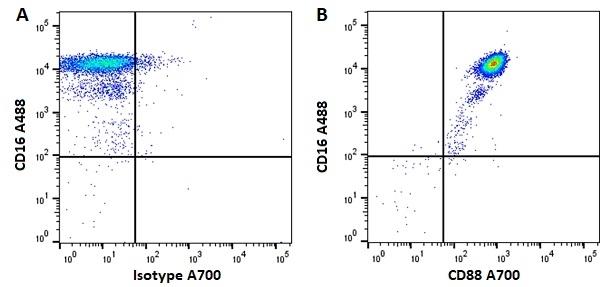 Anti Human CD88 Antibody, clone P12/1 thumbnail image 2
