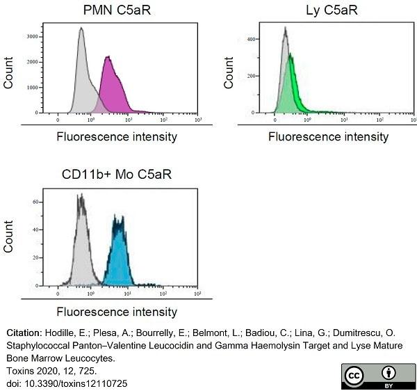 Anti Human CD88 Antibody, clone P12/1 thumbnail image 3