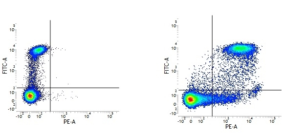 Anti Human CD9 Antibody, clone MM2/57 thumbnail image 2