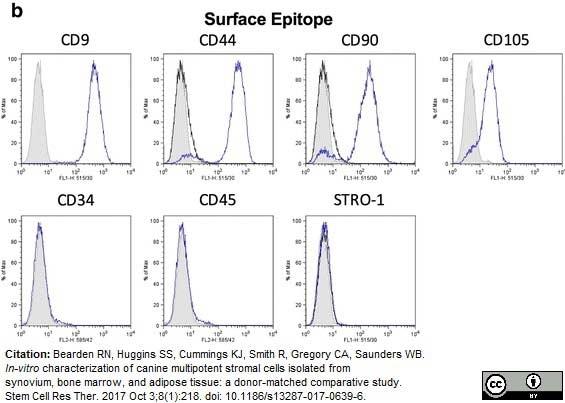 Anti Human CD9 Antibody, clone MM2/57 thumbnail image 3