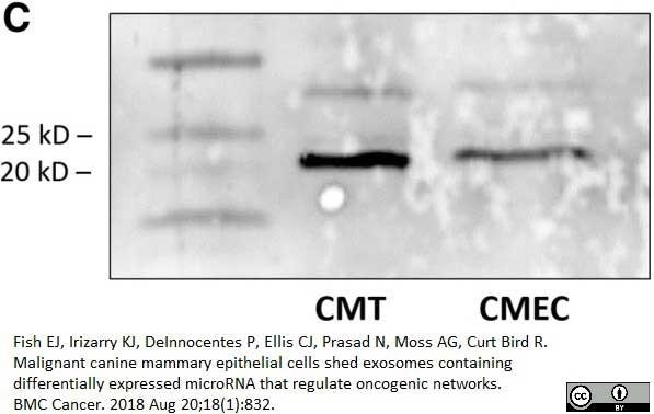 Anti Human CD9 Antibody, clone MM2/57 thumbnail image 4