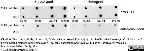 Anti Human CD9 Antibody, clone MM2/57 thumbnail image 6