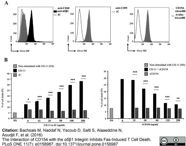 Anti Human CD95 Antibody, clone LOB 3/17 thumbnail image 3