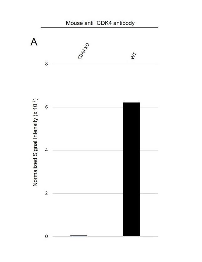 Anti CDK4 Antibody, clone 1529CT850.162.73 (PrecisionAb Monoclonal Antibody) thumbnail image 3